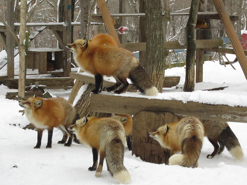 In the winter, they're at their fattest and furriest!