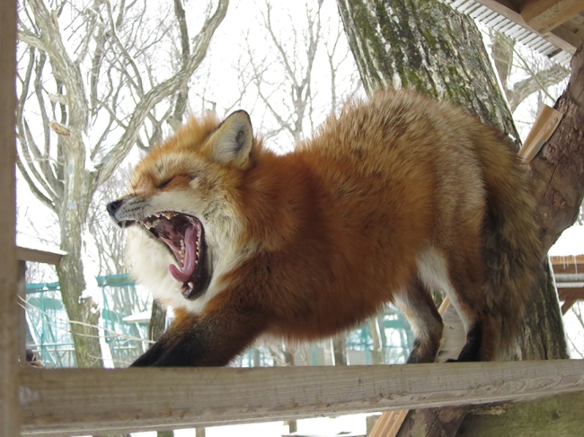 Fox Village Even Better With Snow On Top Jonelle