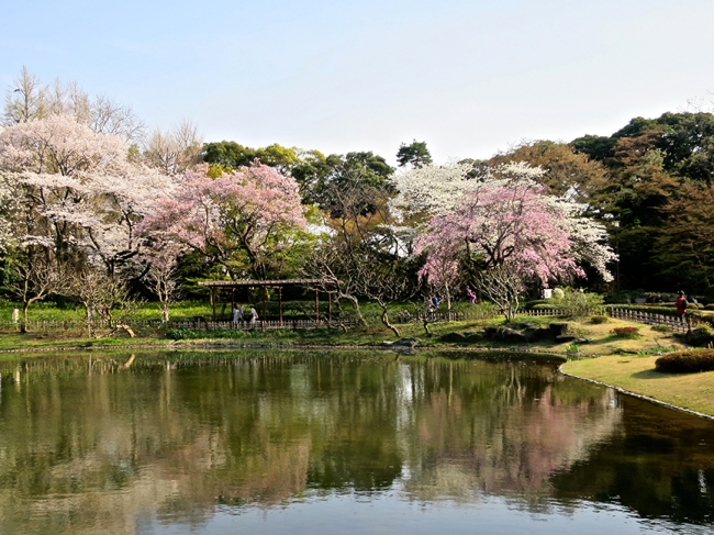 SPOT #5: The Ni-no-Maru Garden inside the moat has both early and late blooming trees, plus a nice reflecting pond