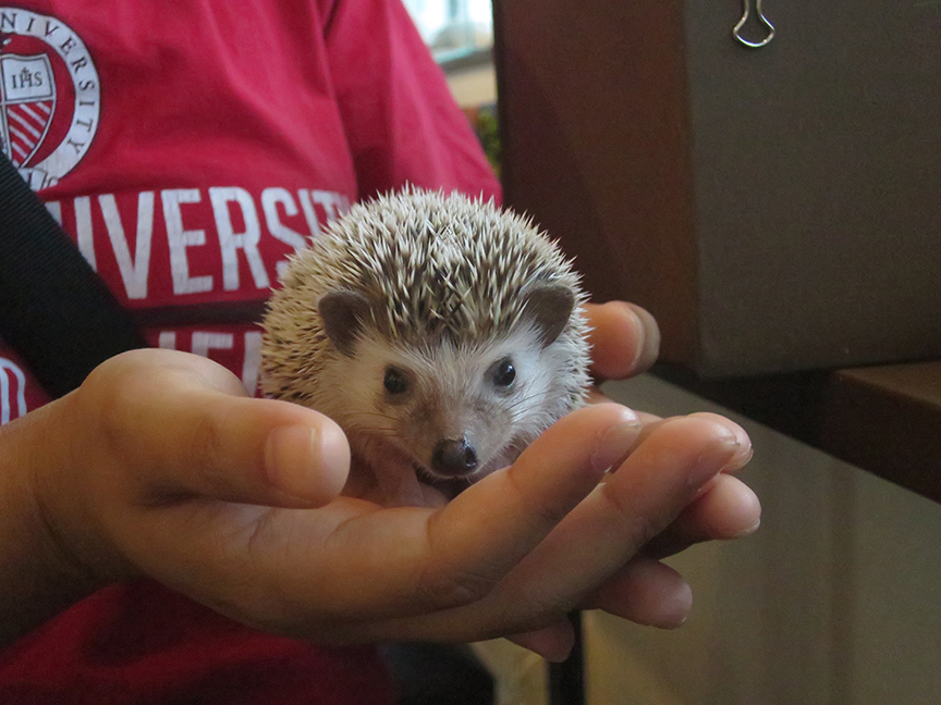 And if you absolutely can't leave without a hedgehog of your own...