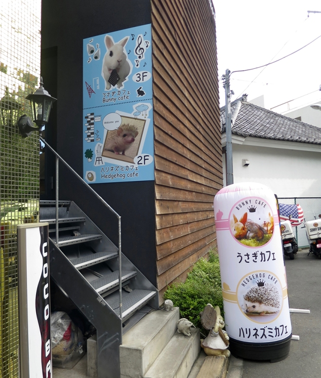 The hedgehog cafeis down a tiny side street near Roppongi Station, but it isn't hard to find