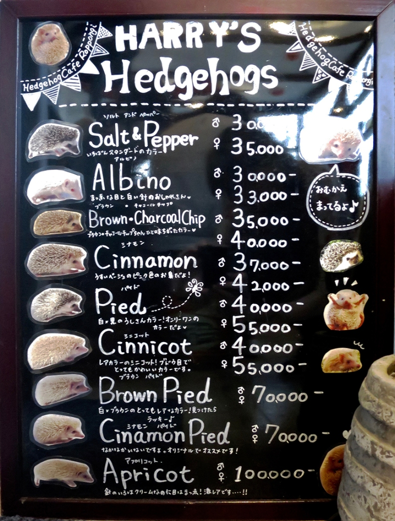 And if you absolutely can't leave without a hedgehog of your own, you can adopt them for a stack of cash
