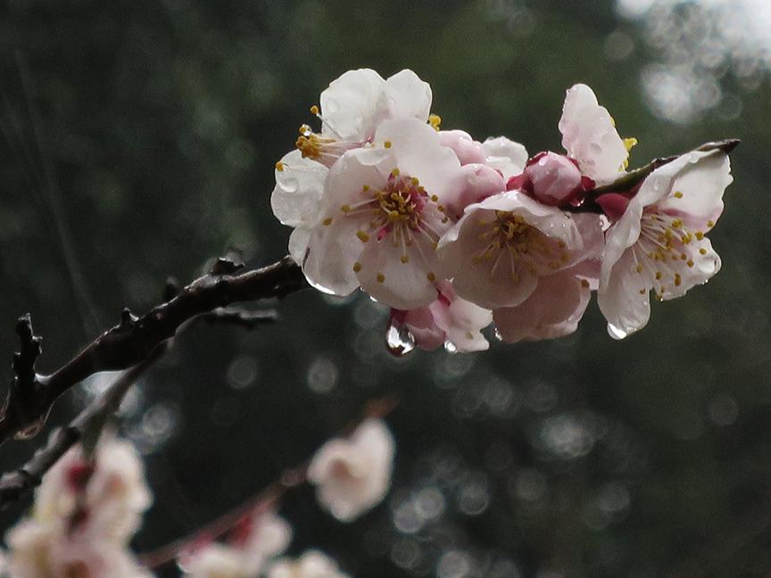 Photo taken on Mar 5