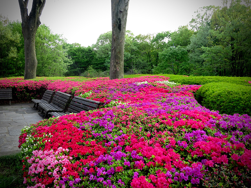 Where To See The Most Amazing Azaleas In Tokyo Jonelle Patrick S