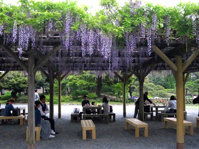 Where To See The Most Beautiful Wisteria In Tokyo | Jonelle ...