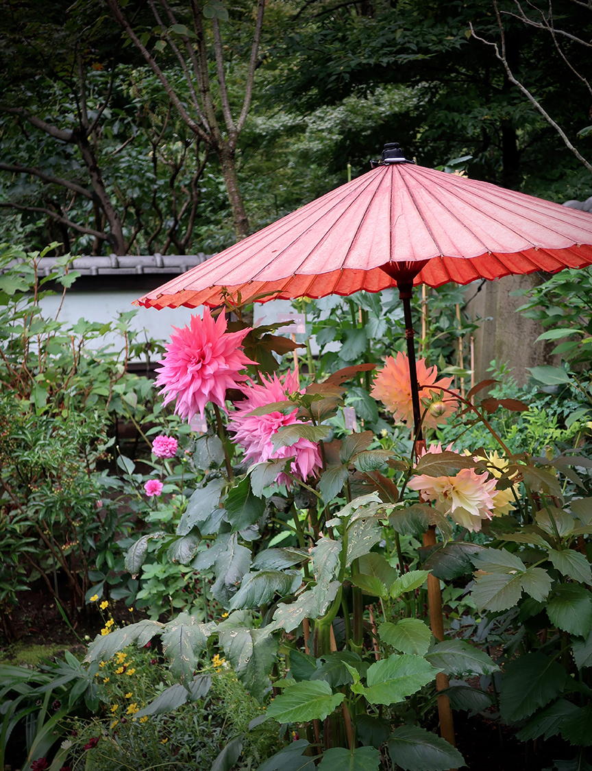 This Year Theyu0027re Letting Us Come In To See The Dahlias Too! Bring Your  Thesaurus, Though, So You Donu0027t Wear Out The Word WOW.