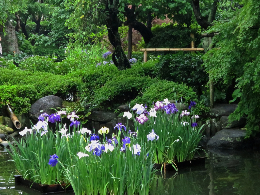 Where To See The Best Iris Gardens In Tokyo Jonelle Patrick S