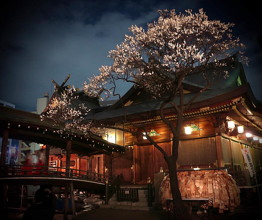 Plum trees lit up at night at Yushima Tenjin shrine