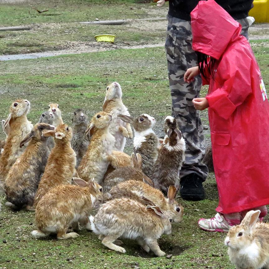 Small child in red raincoat feeding rabbits at Japan's bunny island Okunoshima