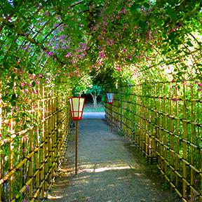 Tunnel of bush clover hagi at Mukojima Hyakka-en inTokyo